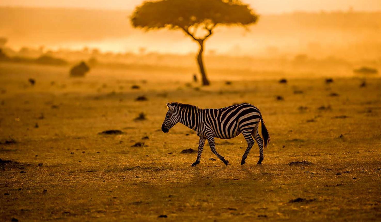 Tanzania-Safaris
