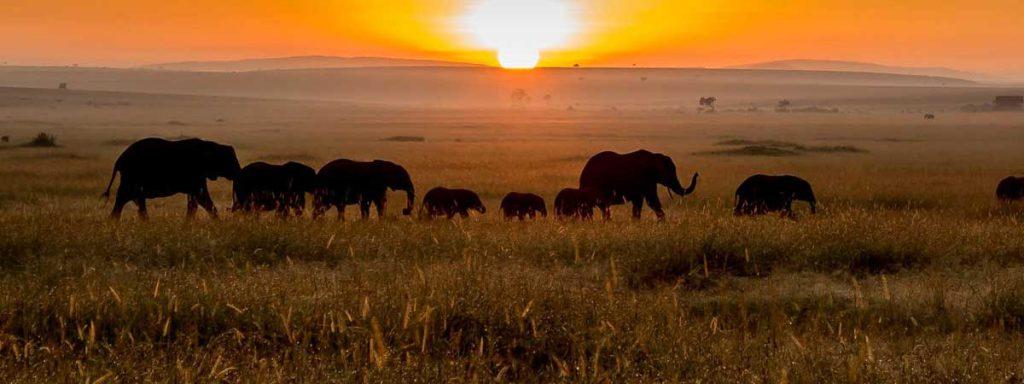 Tanznaia-safaris-7-days